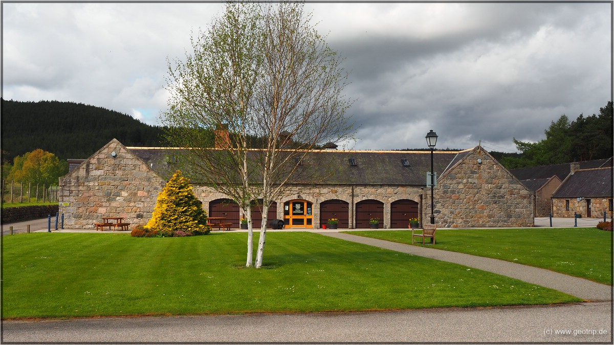 Suddenly - Royal Lochnagar