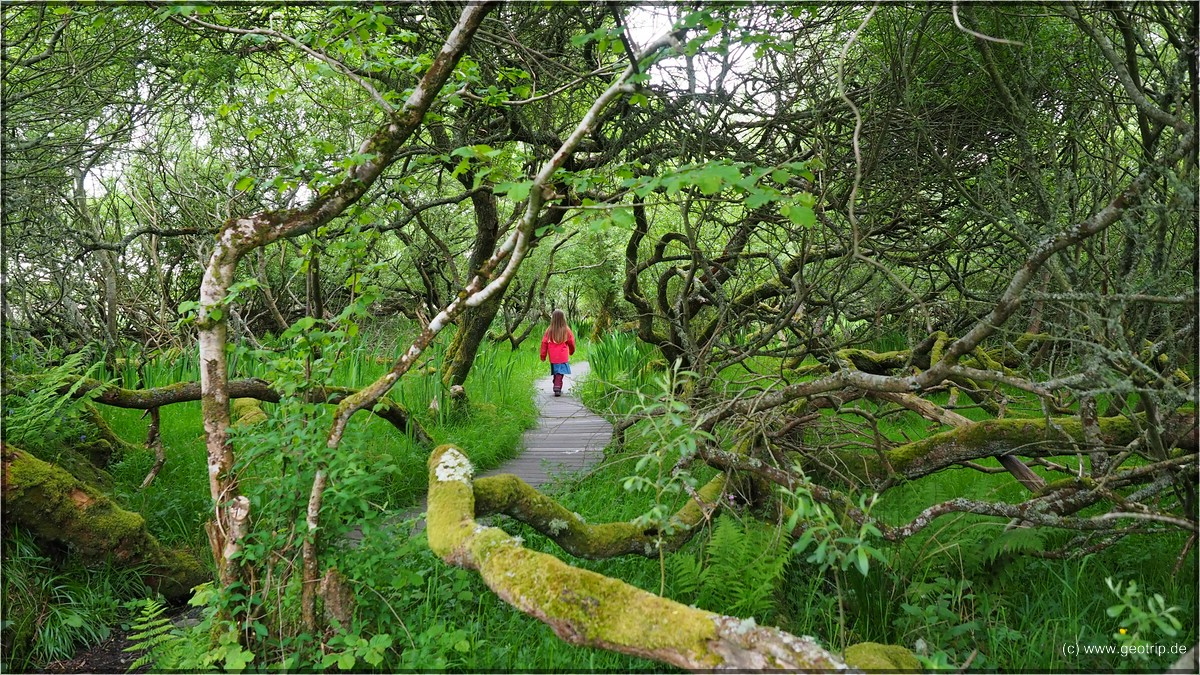 Im Sumpf - wobei sich Wetland irgendwie passender anhört