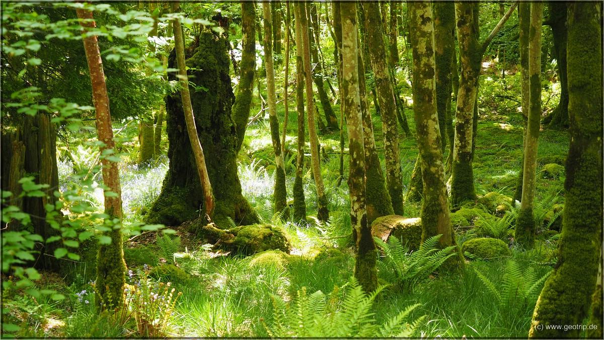 dafür ist der Wald sehr lauschig