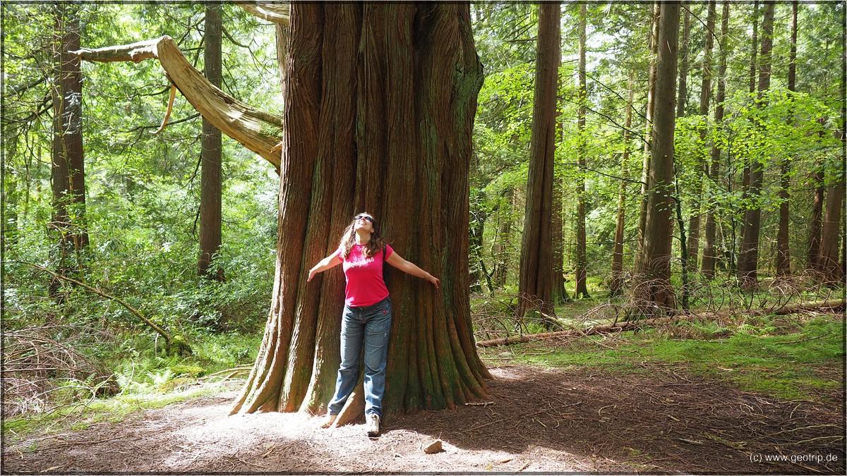 Toller Wald, dafür hat es schon gelohnt