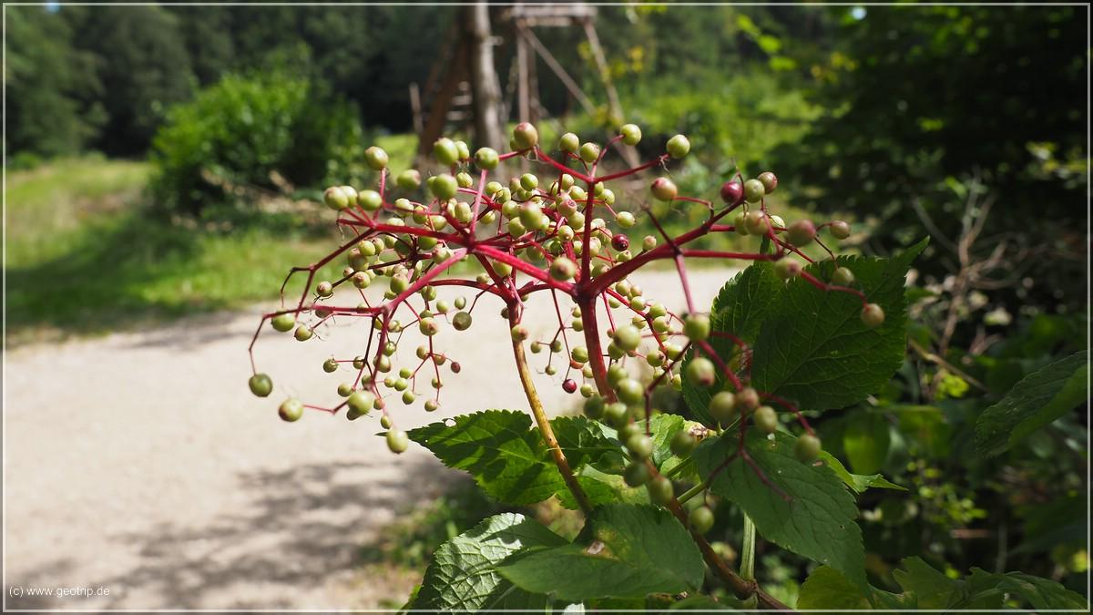 und seltsame Pflanzen