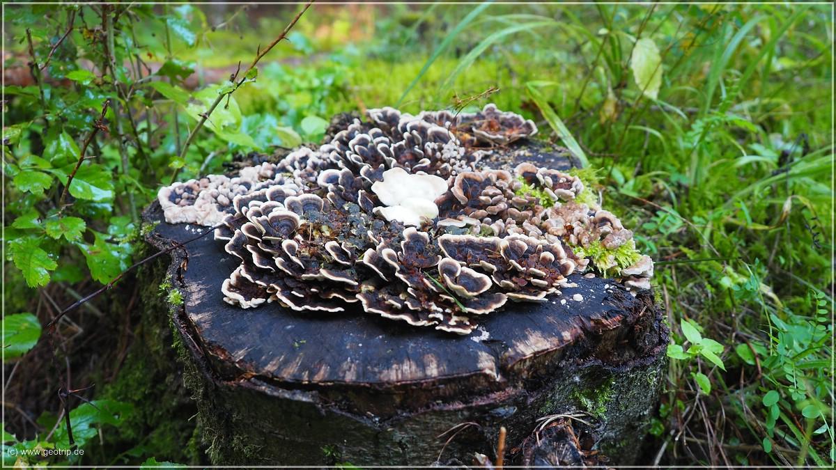Ein Pilz wie eine Skulptur