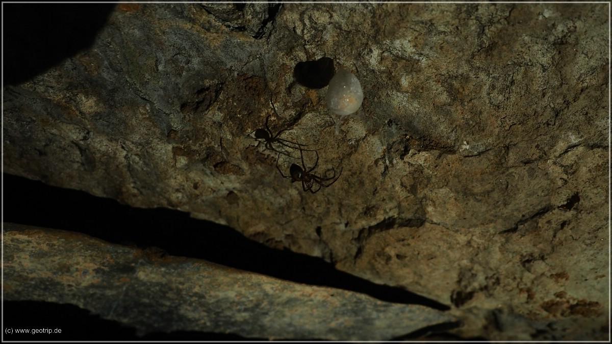 iIndrucksvolle Höhlenspinnen - leider fehlt ein Größenvergleich